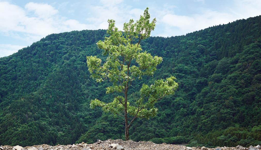 未来の森を育む部メインビジュアル